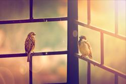 Birds uses UV light