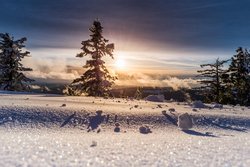 Snow reflects UV light