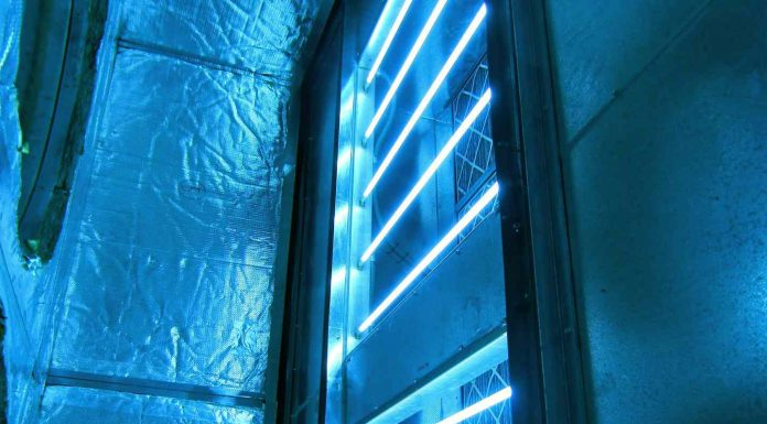 does uv light kill mold
