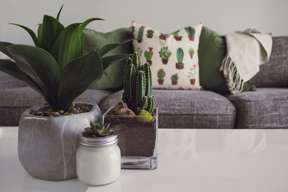 Indoor Plants On A Table In The Living Room With Sofa In The Backround