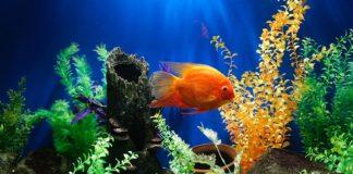 sponge filter in a fish tank